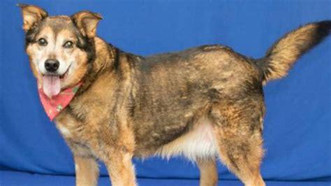 dogs   adopt  week  michigan humane society