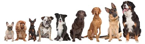 what to do after your has puppies pet grooming dubai global pet relocation services