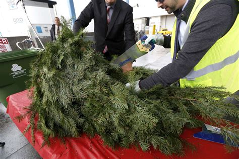 where to recycle your christmas tree canoga park