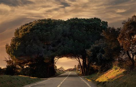 amazing tree 21 unseen tunnels that will convince you heaven is on