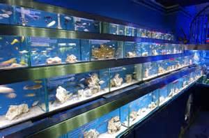 Fish Store Aquarium Store Uk Visit Our Shop For Aquariums