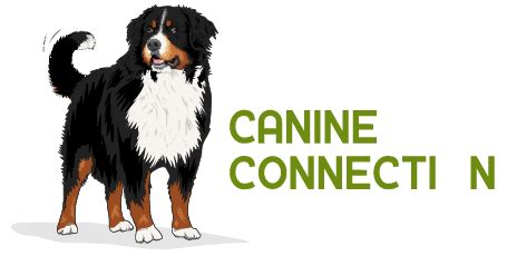 day care fayetteville ar the canine connection daycare and boarding in northwest arkansas