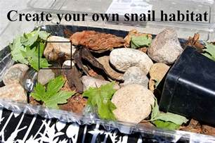 Tools Needed To Make Cabinets How To Create Your Own Snail Habitat Make