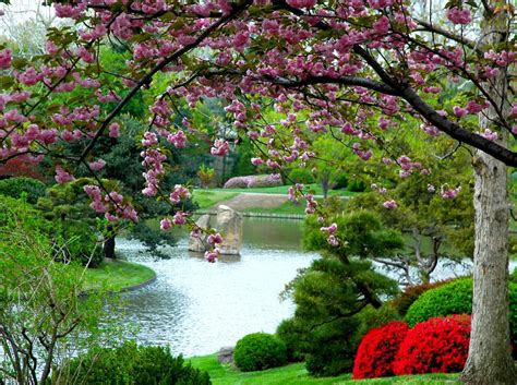 Spring Is The Best Time To See Cherry Blossom And Other Flower Garden Scenery