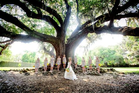 Wedding Arch Rental New Orleans by Audubon Park Tree Of Wedding A Beautiful And Free