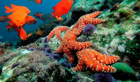 Website Of The Week Starfish by The Pacific Starfish Die Continues But There Is New