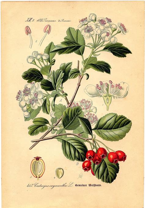 beautiful floral botanical botanical prints pinterest