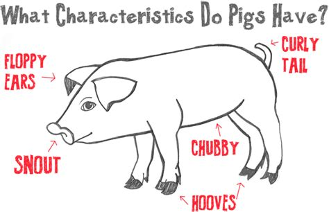 big guide to drawing cartoon pigs with basic shapes for