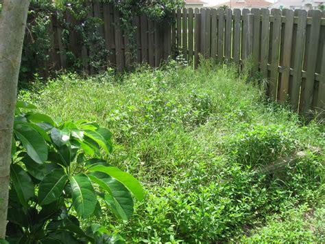 backyard weeds garden tips for landlords anreps blog