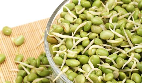 are beans for dogs can beans help manage weight in dogs