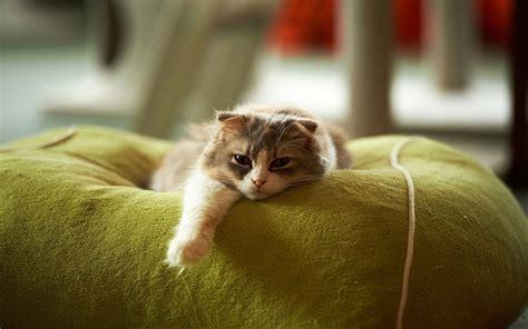 wallpaper lazy cat lazy cat wallpaper 17909
