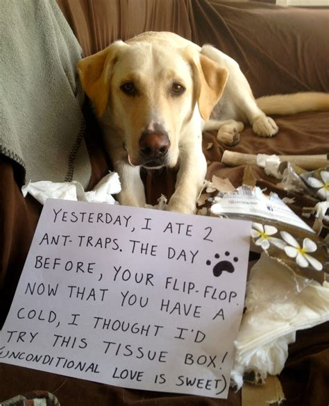 ate ant trap 17 best images about shaming on to best dogs and my
