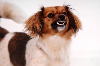 aggressive puppy behavior aggression types of aggressive behavior