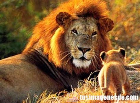 imagenes de animales carniboros animales carnivoros images reverse search
