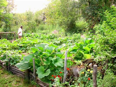 permaculture vegetable garden homesteaders vs preppers what s the difference