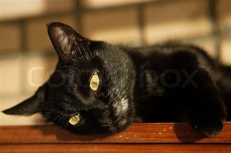 Caterpillar Ct11248 Free Box Yellow Black black cat with yellow stock photo colourbox