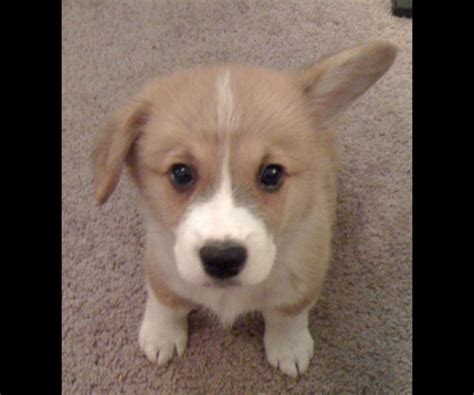 most cutest puppies 35 of the most cutest puppies on earth yummypets