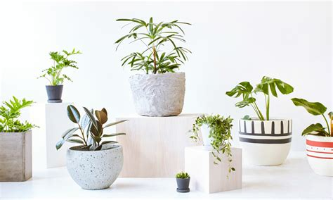 modern plants indoor demand for indoor plants in modern world