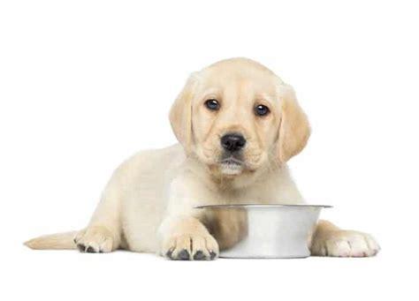 alimentazione casalinga per cani alimentazione casalinga miti da sfatare tuvali