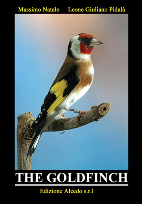 the goldfinch the book