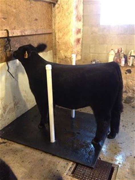 25 best ideas about cattle barn on cattle