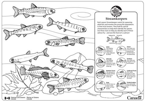 river fish coloring pages alouette river management society kids page alouette