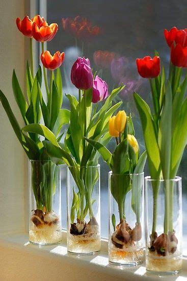 vasi trasparenti vetro vasi trasparenti in vetro cilindrici per idrocoltura di
