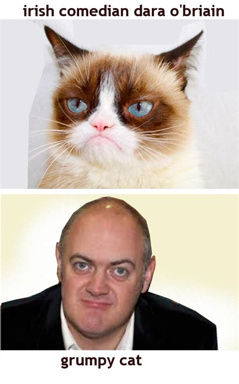 Original Grumpy Cat Meme - dara o cat grumpy cat know your meme