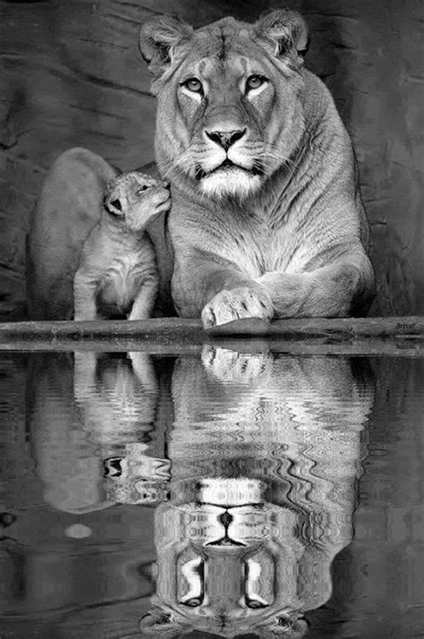 King And Queen Of The Jungle | Incredible Snaps