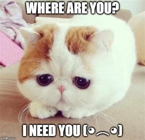 i need you meme image tagged in sad cat imgflip