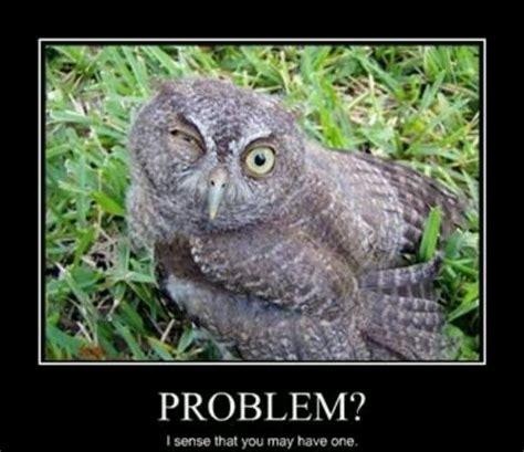 Funny Owl Memes - funny owl memes