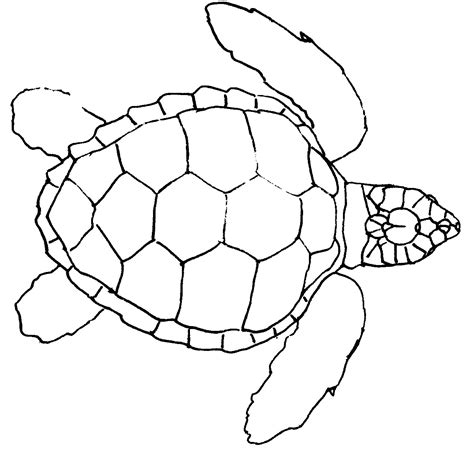 easy turtle coloring page simple sea turtle outline
