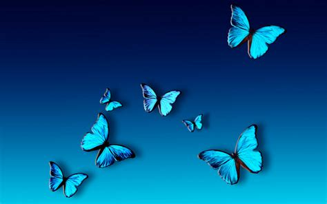blue wallpaper with butterflies blue butterfly wallpaper 1280x800 82405