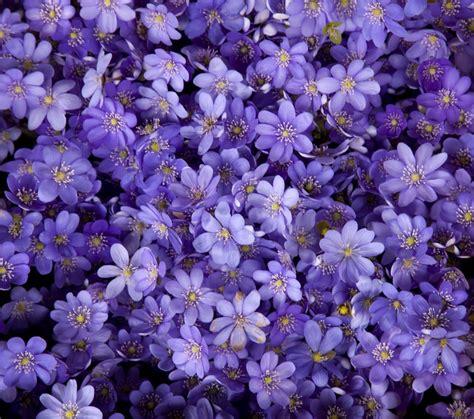a sanremo il carnevale 232 in fiore easyviaggio
