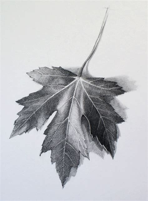 Drawing Leaves by How To Draw A Leaf Lesson By Drawing Academy