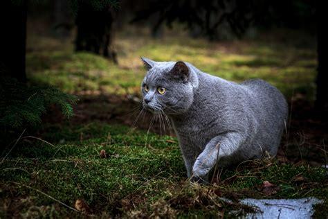 topi in casa cosa fare cosa fare se il gatto cattura un topo gli amici di max