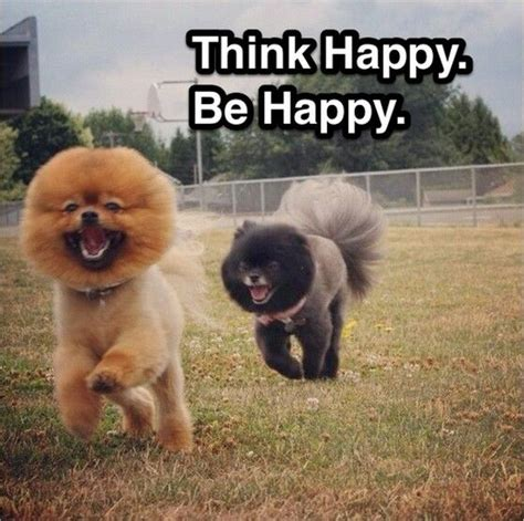 Happy Thoughts Meme - 62 best images about pomeranian memes on pinterest