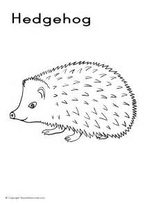 hedgehog coloring picture
