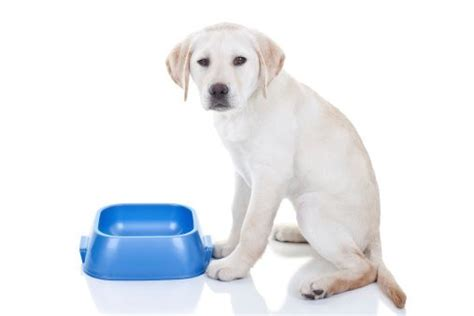 puppy upset tummy how to help a with an upset stomach the dogington post