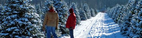 christmas tree farms boise christmas decore