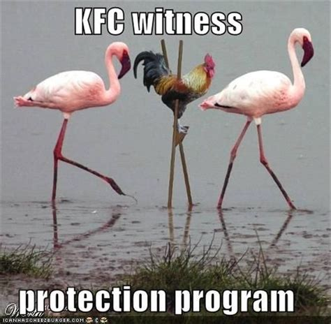 Silly Animal Memes - witness protection program