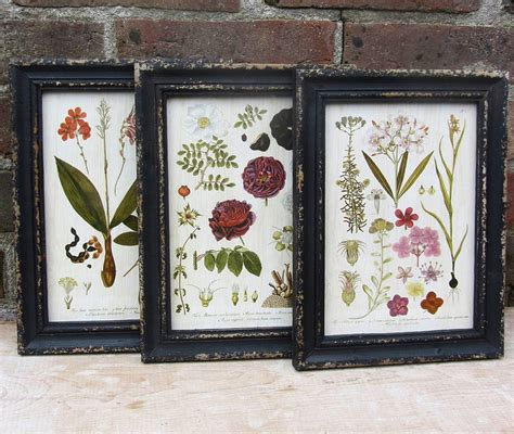 how to frame a print framed botanical print by horsfall wright notonthehighstreet