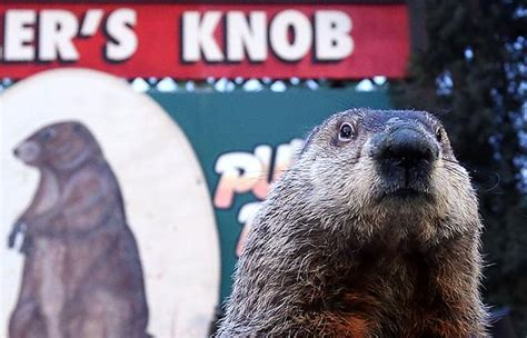 groundhog day us groundhog day 2014 photos abc news