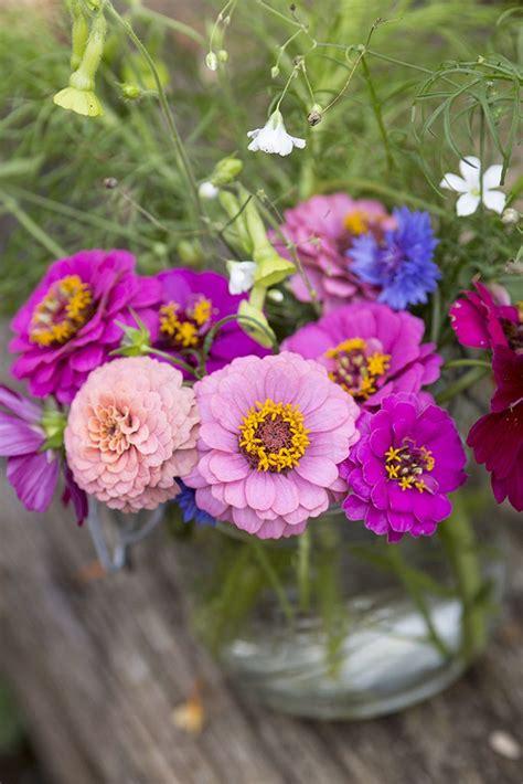 Johnsons Seeds Zinnia Sprite Mixed 216 best zinnia images on zinnias cut flowers and garden seeds