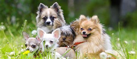 alimentazione senza proteine animali alimentazione vegetale per cani possibile