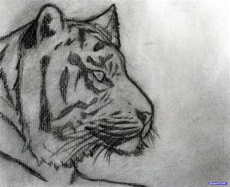 How To Sketch A Tiger Step By Step Sketch Drawing Technique Free Online Drawing Tutorial Drawing Sketch