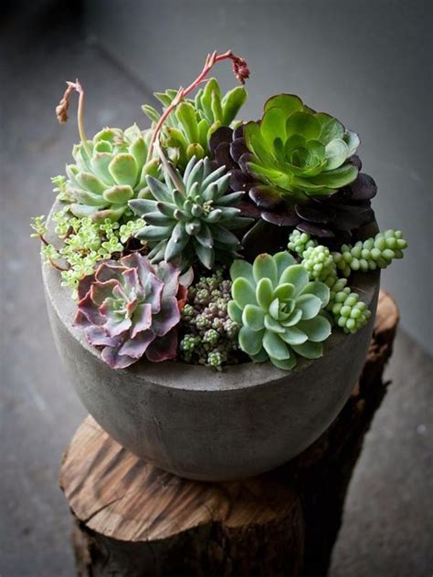 Succulent Planters Ideas by Fascinating Succulent Plants Designs You Need To Check
