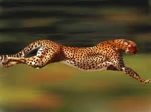 Fast Can Jaguar Run From The Ashes A Cheetah Rises A Peculiar Ghanaian Tale