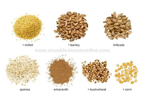 whole grains names names of all grains pictures to pin on pinsdaddy