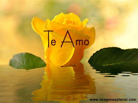 imagenes flores amarillas con frases imagenes de rosas amarillas animadas con agua en
